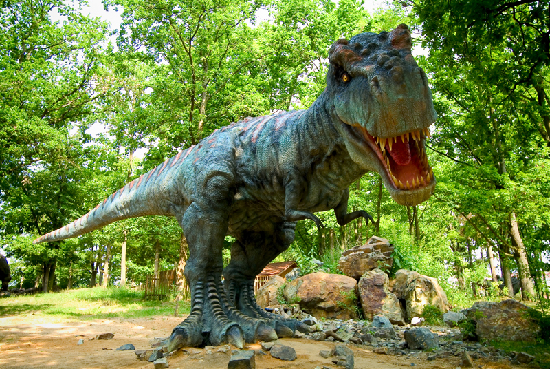Summer At The Zoo And Dinopark Official Website Of The